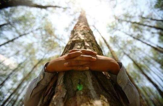 ReforestAction x Alsol